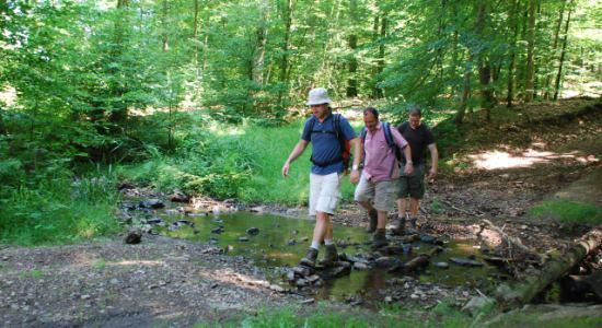 Du sport en forêt pour lutter contre la chaleur